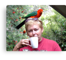 Parrot coffee, Killarney, Qld, Australia Canvas Print