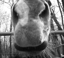 Horse by Brendan Howard