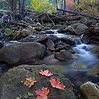 Autumn Along the Creek by Sue  Cullumber