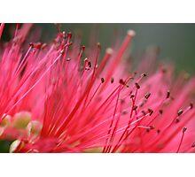 Plush Pink Photographic Print