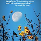 Redbubble Moon Through Silver Maple by TrendleEllwood