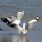 Dancing gulls by Christine Beswick