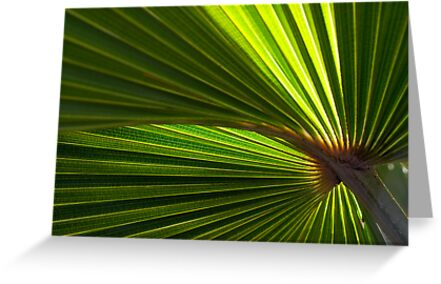 Sunlight through Palm Leaf #2 by farmboy