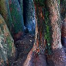 Old Tree Trunks by farmboy