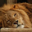 Lion by kmargetts
