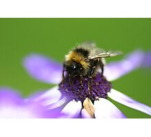 Tea Time for Mr Bee Photographic Print