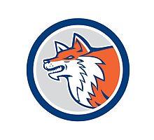 Red Fox Head Pouncing Circle Retro by patrimonio