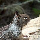 Ocean Squirrel by samc352