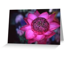 The power of the lotus Greeting Card