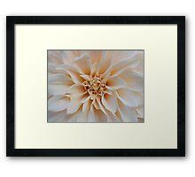 Cream Dahlia Framed Print