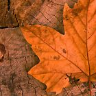 Leaf n Log by Don Stott
