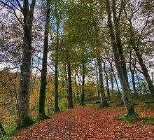 Forest Walk  by Darren Wilkes