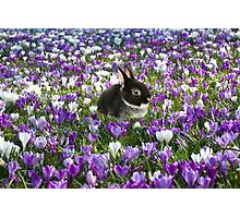 Easter Bunny in the Spring Photographic Print