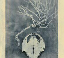 Tortoise Shell and Plant Skeleton by Antaratma Images