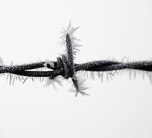 Frozen Barb by Neil