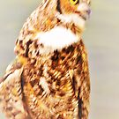 Owl by ♥⊱ B. Randi Bailey