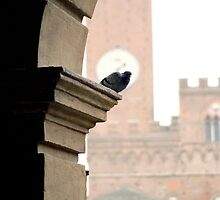 Resting, Siena by Tiffany Dryburgh