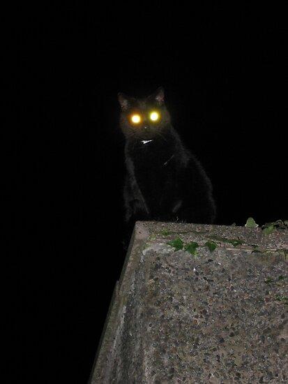 Witch's Cat by Roddy Atkinson