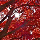 Autumn Illuminated ! by Nancy Richard