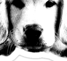 Golden Retriever Puppy Dog Engraving Sticker