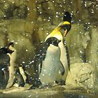 Penguins by Reeshia1230