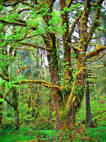 olympic national park by Bruce  Dickson
