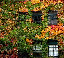 windows by Bruce  Dickson