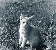 Peach in the grass by Lynn Starner