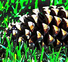 Pine Cone Fun by heatherfriedman