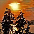 """""""Sun through Cedar"""" by Steven Schwartz"""