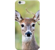 Portrait of a Whitetail Deer iPhone Case/Skin