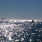 kayaking in NZ by Susanne Schmitz