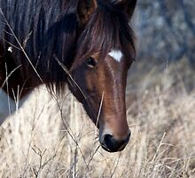 Equine of Assateague  by Dawn Crouse