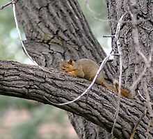 Sleeping Squirrel Large by Holly Werner