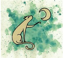 Moon Hungry Cat Photographic Print