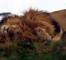 Sleeping Kings by Andrew Wilson