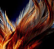 Honey Dust Feathers by Jef Harris