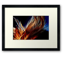 Honey Dust Feathers Framed Print