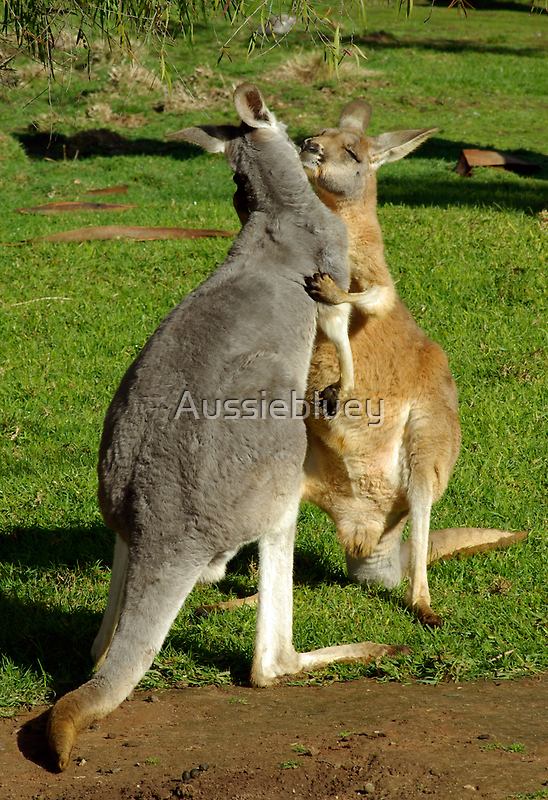 Kangaroo's sharing a moment. by Aussiebluey