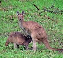 Mum and Joey by Caroline Scott