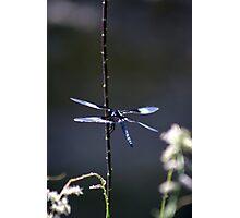 Blue Desert Dragon Photographic Print