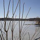 Winter Lake by Tamara Weiss