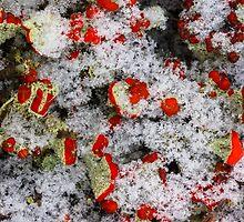 Lichen flowers by Forestpictures