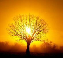 Sun Rise by Ed Stone