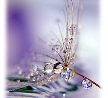 reflection drop3 by Christine Dyrnes