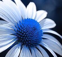 Feelin Blue by John Pacifico