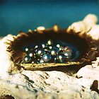 Abrolhos Islands by Danielle Prowse