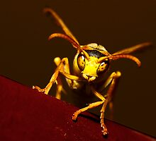 Paper Wasp by Simon Fallon