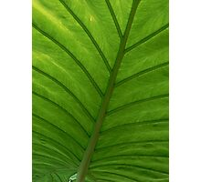 #100  Green Leaf Macro Photographic Print