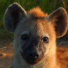 Hyena cub by Mark Lindsay